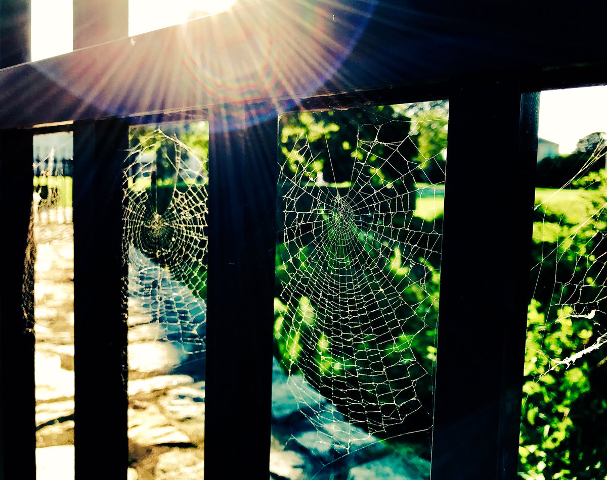 "preeti chavda on twitter: ""delicate cobwebs at marble house"