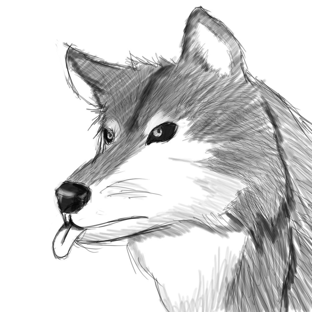 Sirdrawsalot On Twitter Dnd Dire Wolf Dnd Dnd5e Wolf Dailydoodle Dailyart Art Artisttwitter Artists Doodle Doodles Doodles Finishwiththe16lettersleftttt Https T Co Di6ejj8ufh Big, strong, fast, lethal and wise, wolfkind are humanoids with the wolf face and their whole body covered by fur. dnd dire wolf dnd dnd5e wolf