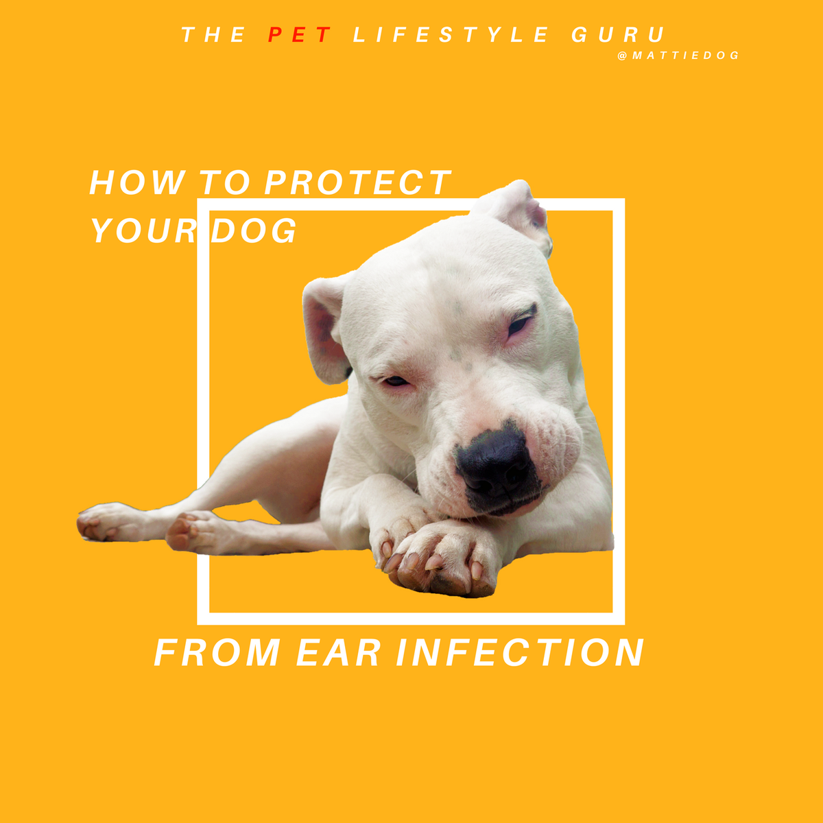 Learn how to prevent your dog's ear infections naturally with calendula! #holisticpet https://t.co/Wl8fdIntvx https://t.co/tpSC63Bc3X
