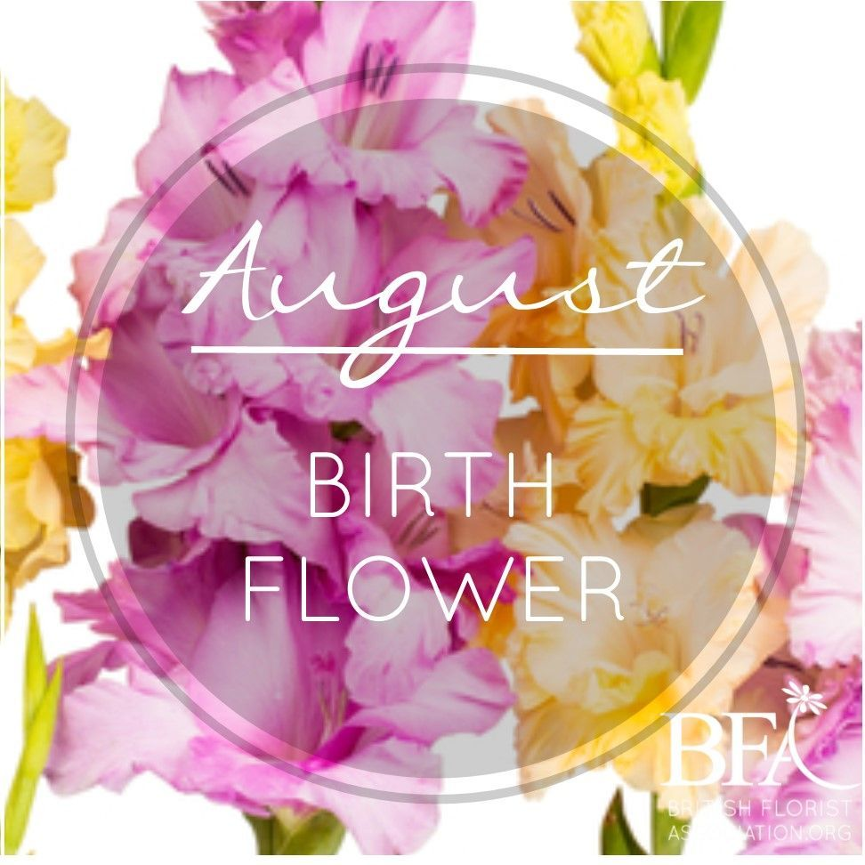 """Microgrower on Twitter: """"August Birth Flower is the #gladiolus, what's your birth flower? #flowers https://t.co/VlvYbAPkC5… """""""