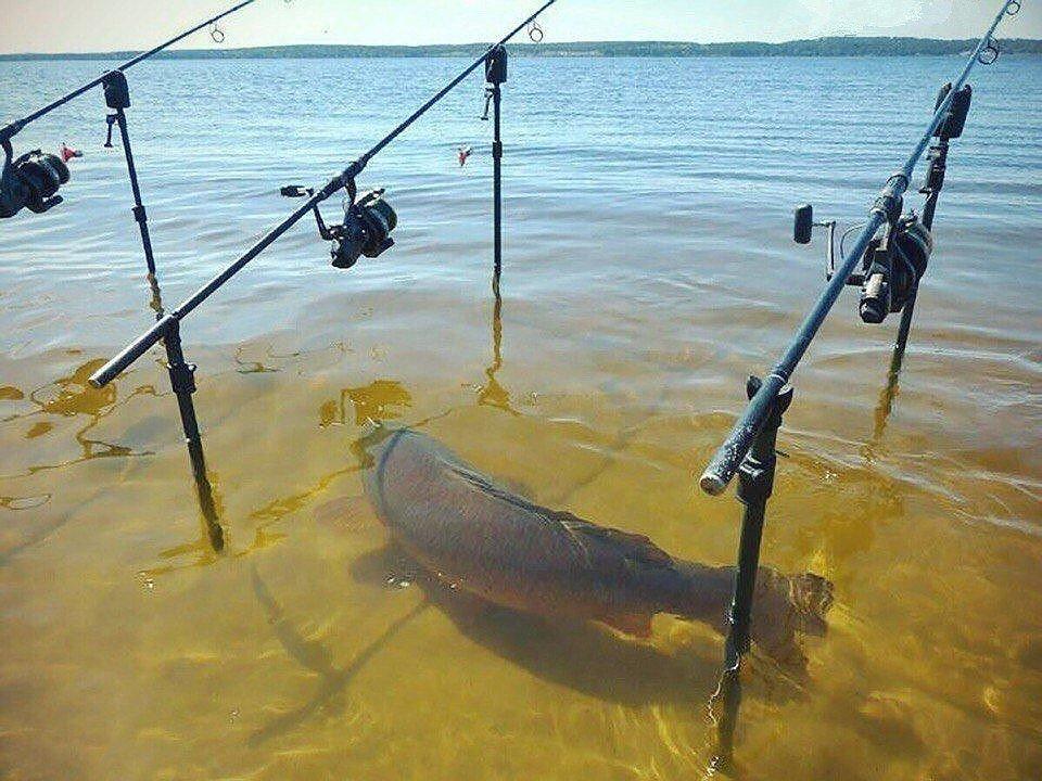 Прикольные рыбалки видео, поздравления юбилеем лет