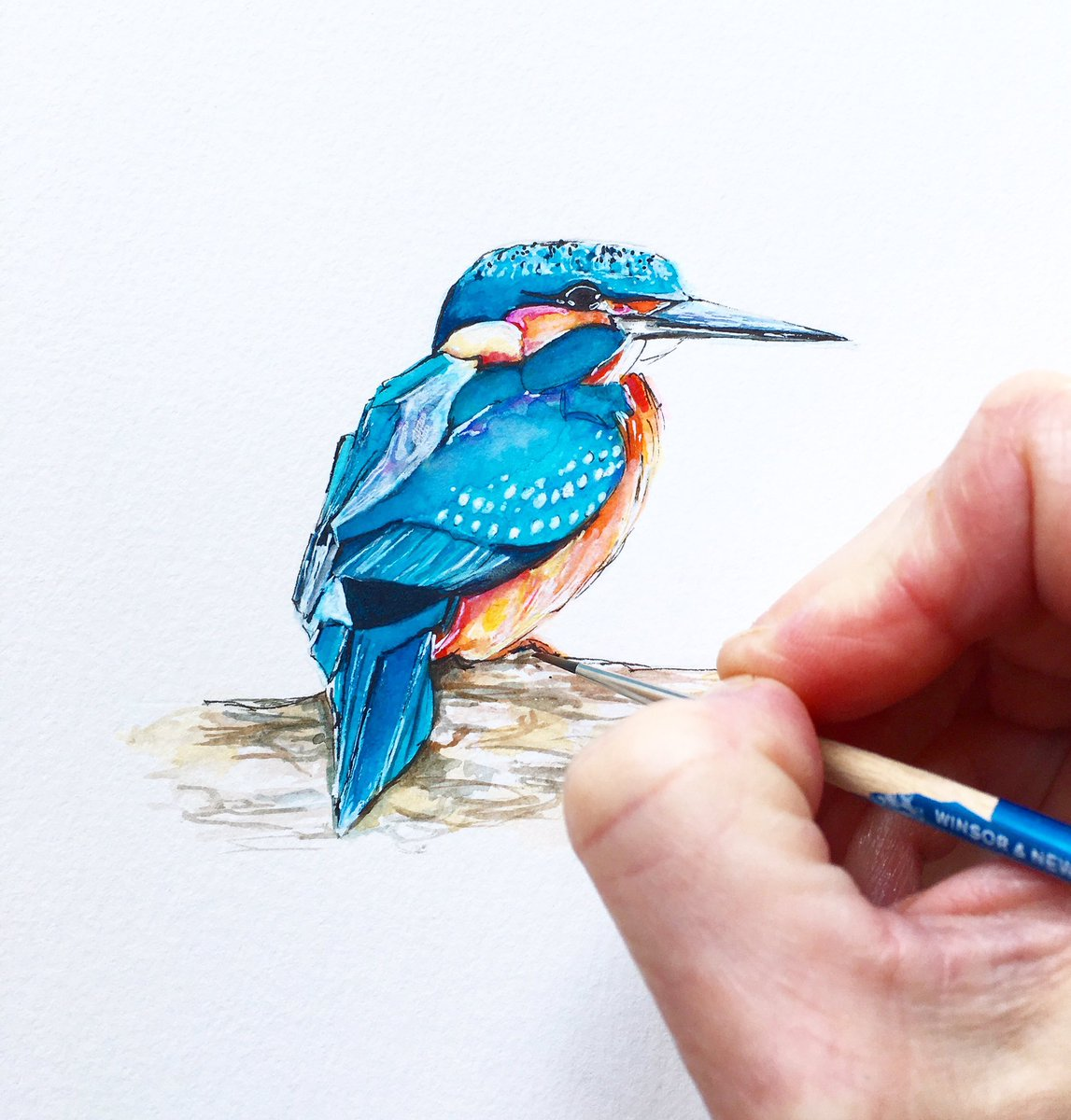 Claire S Wilson On Twitter Kingfisher Watercolour Kingfisher