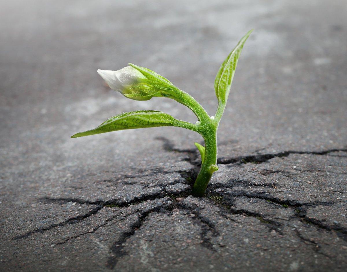 SRI Funds - Expect Increase #DSI #KLD #SPYX #TOK #CRBN #ETHO #EQLT #LOWC #ESG #ESGG #GRNB  https:// seekingalpha.com/article/409326 1-sri-funds-expect-increase &nbsp; … <br>http://pic.twitter.com/ZkB2hbOnuw