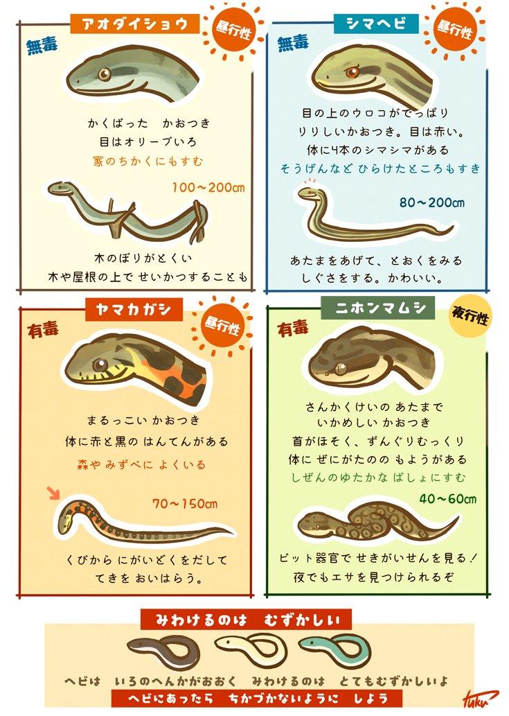 ヘビが話題になっているので。 身近なヘビのみわけかた(+蛇足) https://t.co/bf3FQa5Xwy