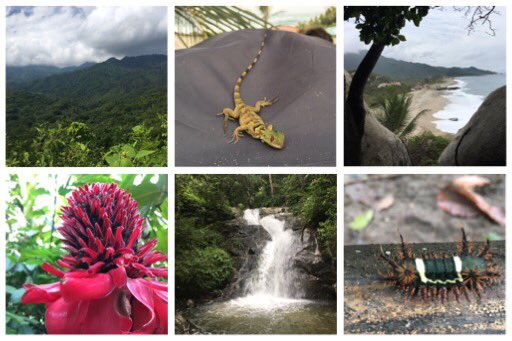 ¡Adiós Colombia! Beautiful forest, mountains, beach, biodiversity, friendly people, great chocolate - you've got it all. #ICCB2017 https://t.co/OdplO3YePP