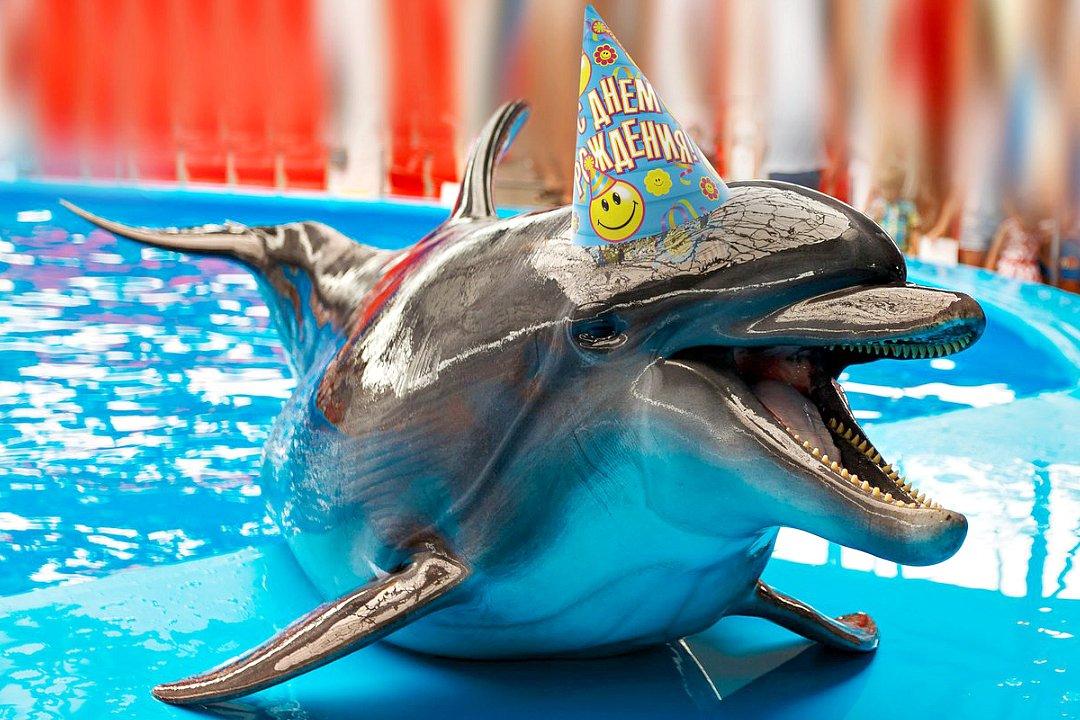 Днем рождения, открытки с дельфинами