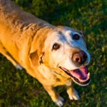 Eating Right: Six Easy to Make Recipes for Senior #Dogs https://t.co/QbAc3THMMG  #pethealth #petfood #seniordogs