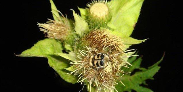 HGIC 2756S Organic Pesticides and Biopesticides: Extension: Clemson University: South Carolina