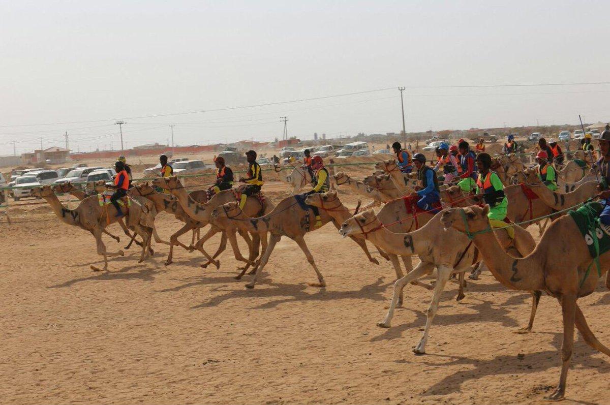 Картинки по запросу saudi arabia camel racing