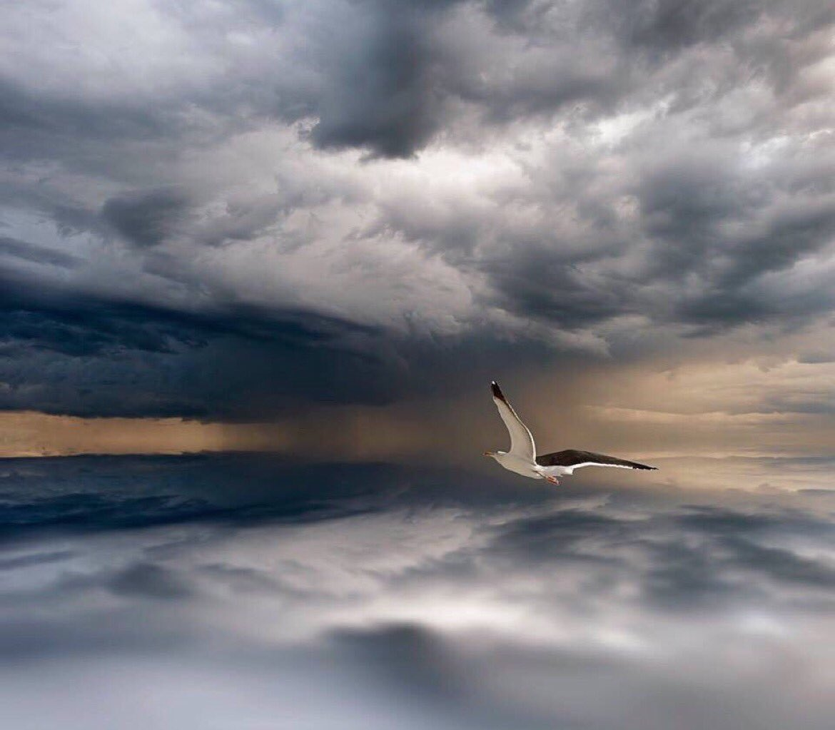 ❦The seagull rides on the wind of the storm with the calm assurance that all storms pass.~AS #storm #clouds #seagull #patience Thx @emsy2015<br>http://pic.twitter.com/5APHkhdtn3