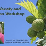 The Hawaii 'Ulu Co-op is hosting a workshop on #breadfruit varieties + identification methods on 8/19 from 10am-3pm https://t.co/84E12sOqIR