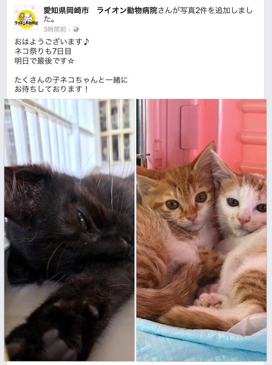 #ライオン動物病院 hashtag on Twitter