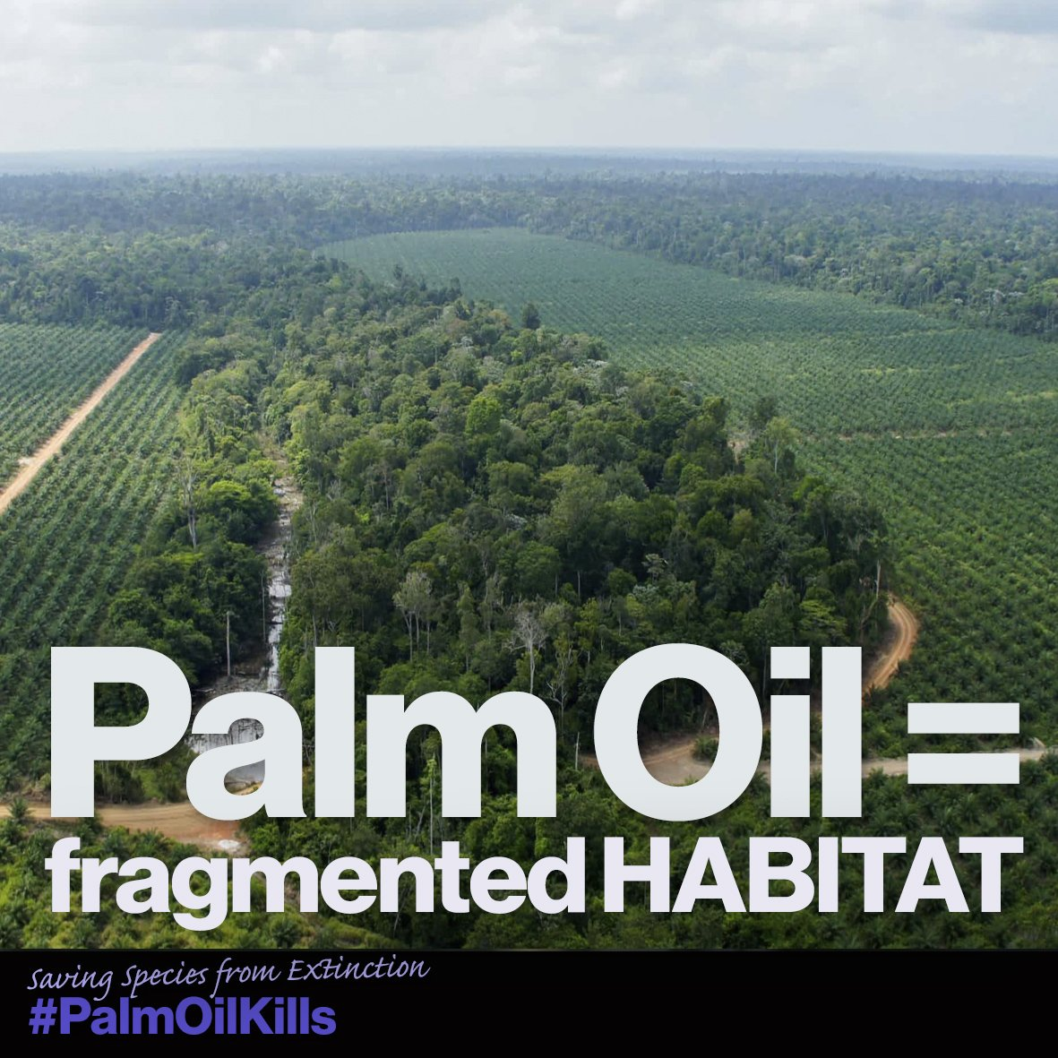 It looks like this: #rspo #wwf #palmoil...