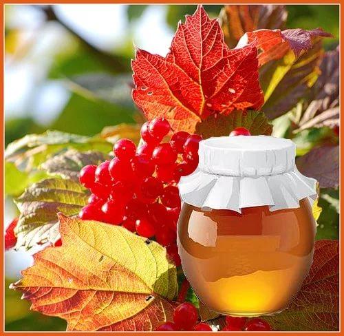 Калина с мёдом рецепт