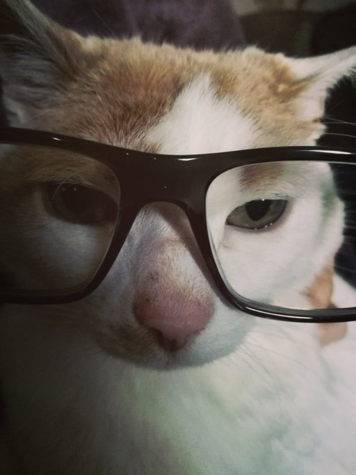 happy birthday and caturday from one of your feline fans rocking his James Gunn look