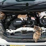 ボンネットの中がすごすぎる!猫が大量に入っていたのを見つけてよかった〜!