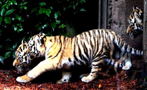 домашние животные картинка на прозрачном фоне