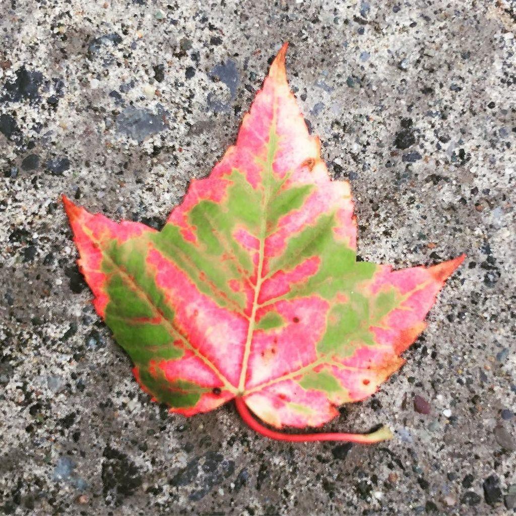 Really? Yet? summer2017 #country #julielapie #fall #red  http:// ift.tt/2hzGGM5  &nbsp;  <br>http://pic.twitter.com/zITkj4Cpov