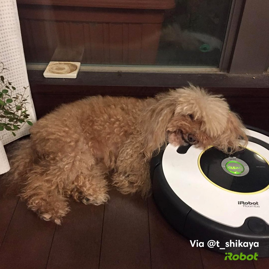 Pleasing Irobot On Twitter Some Dogs Are Besties With A Favorite Download Free Architecture Designs Scobabritishbridgeorg