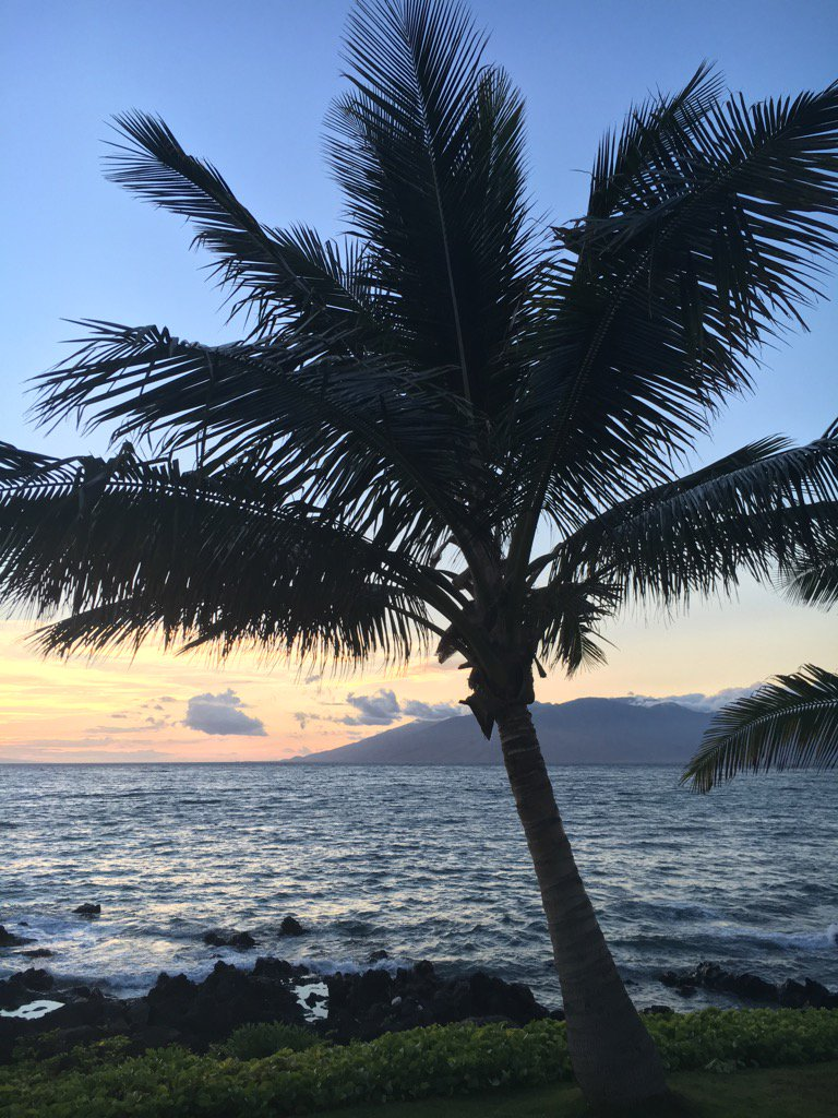Palm tree at #sunset by John Van Kirk #Maui #Hawaii https://t.co/hGEX3EMGmp