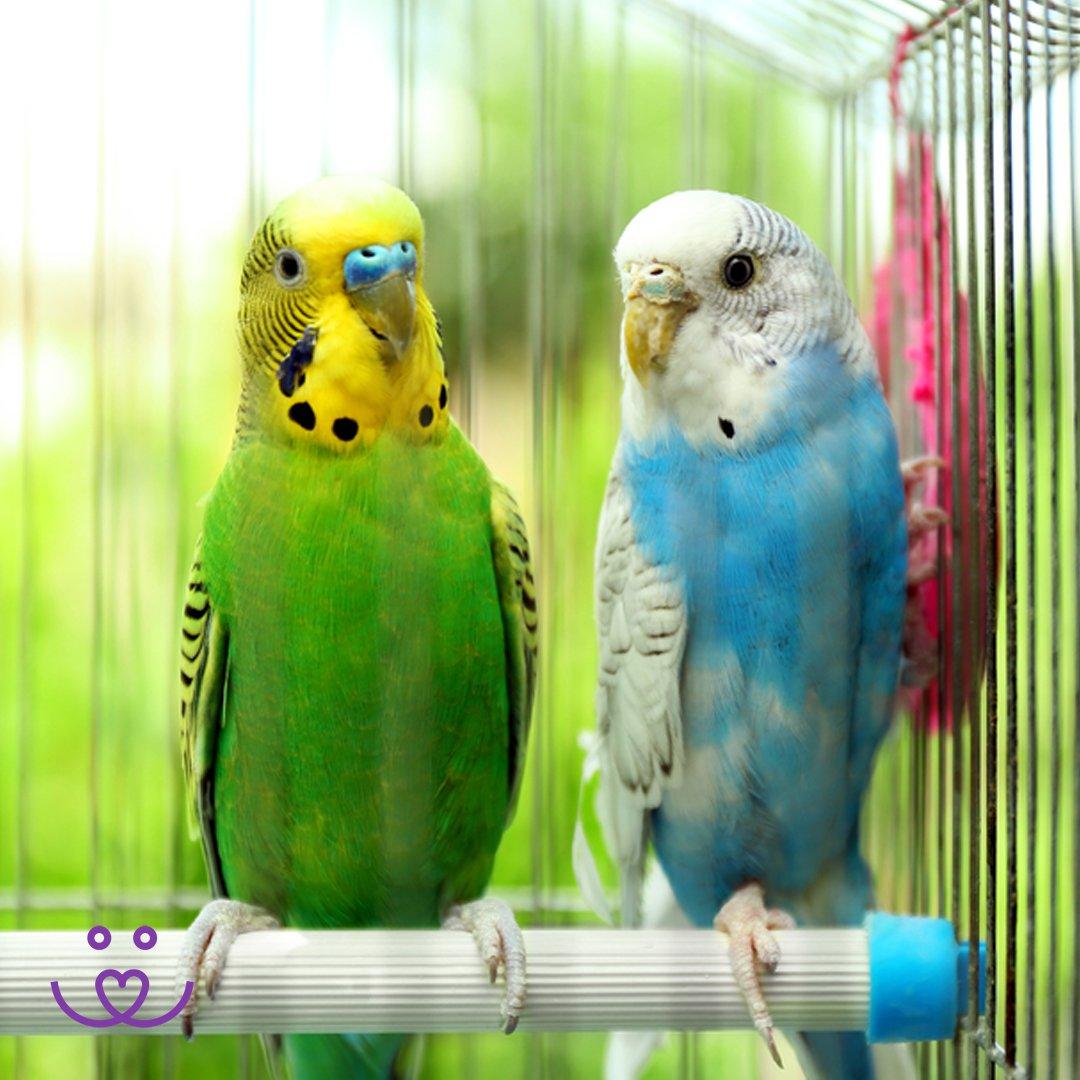 Kanarienvogel außenhaltung