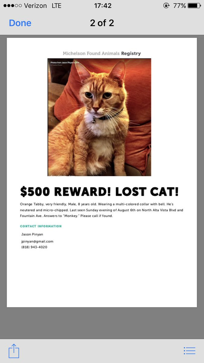 My neighbor lost his cat. Monkey is @WilliamElia1's best friend, help us find Monkey @GayWeHo https://t.co/PYW7QfxLEZ