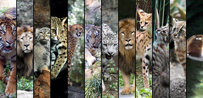 8月8日、今年も #世界猫の日 #WorldCatDay