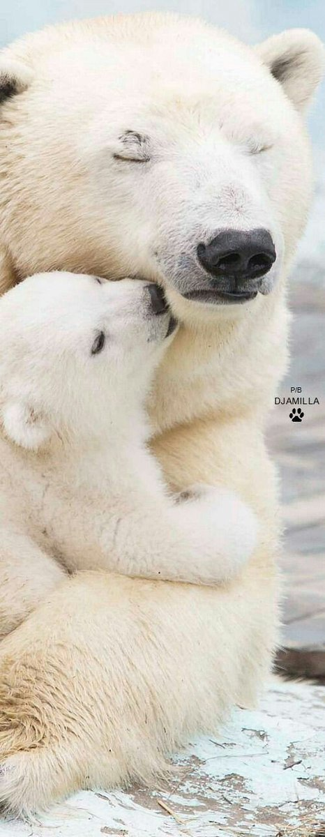 Start the Day with a hugg... Goodmorning! https://t.co/GEQHOltckj