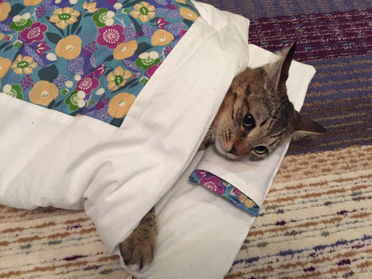 RT @BISHIN_KAWASUMI: 世界中の猫さんに安定と幸せを。 うちの実家の猫は2匹とも元々ノラ猫ちゃんなのです。 今ではすっかりお姫様。笑 にしても、 #世界猫の日  ってなんや? https://t.co/FIGHzSjlk7