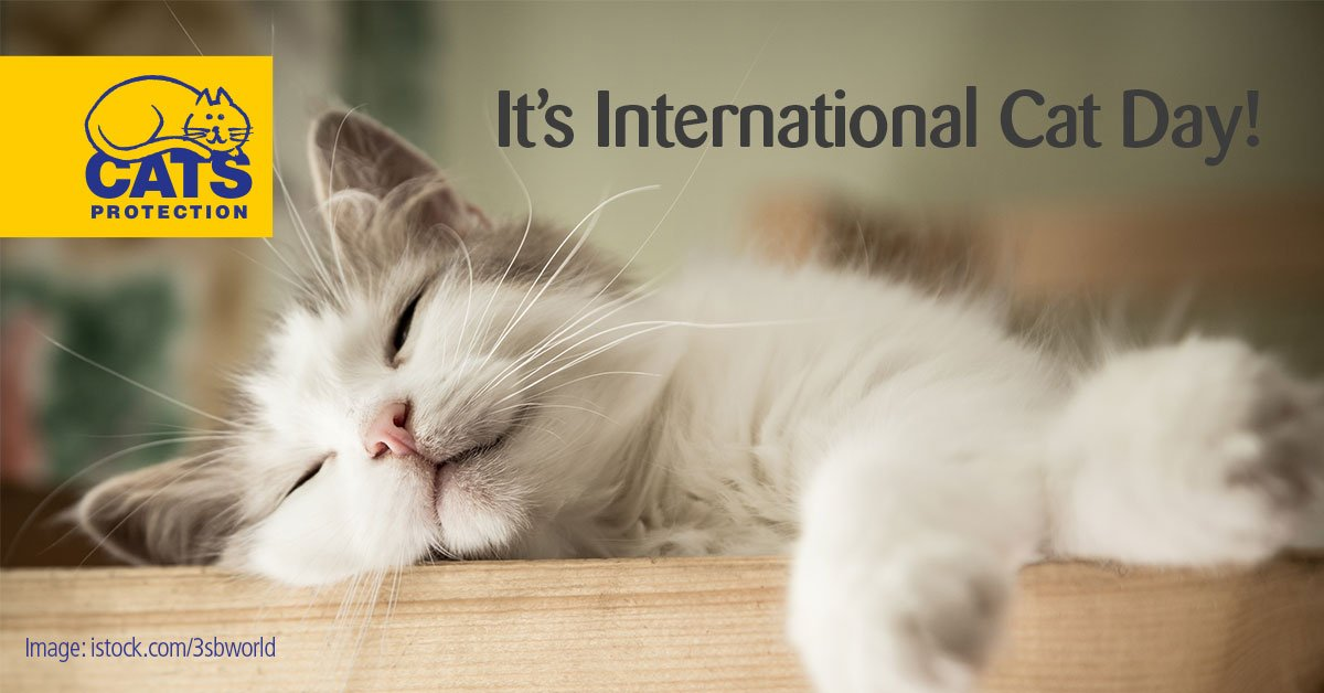 Happy #InternationalCatDay to you and your feline friends!