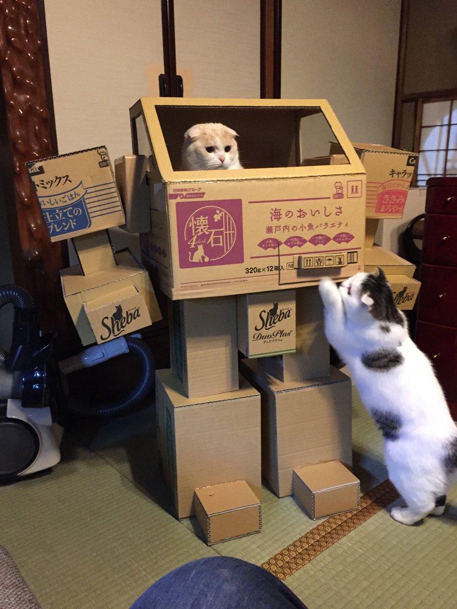 猫たちはロボの取り合いです。