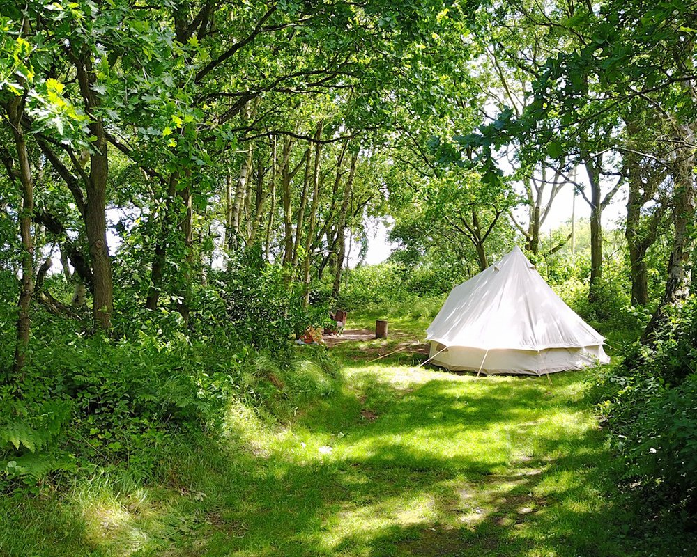From Devon to Dumfries, @GOoutdoors shout out 5 incredible woodland campsites across the UK: https://t.co/PBE2HJJw59 https://t.co/pfx477vT2i