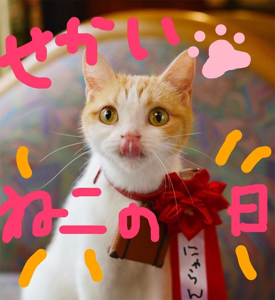 RT @nyalan_jalan: 今日は主役なにょだ。  #世界猫の日 #うちの子自慢ならぬ自分自慢 #にゃらん #じゃらん https://t.co/0SWbWyufxb