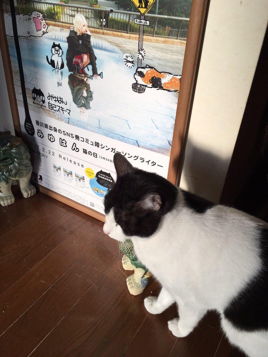 今日猫の日なのかよ?!!? なんて日だ!!!!!!  #世界猫の日