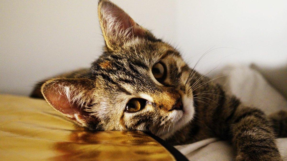 RT @LangdonStyles: Mon petit chat d'amour 🐱🖤 #journeeinternationaleduchat https://t.co/DijcNfpSkS
