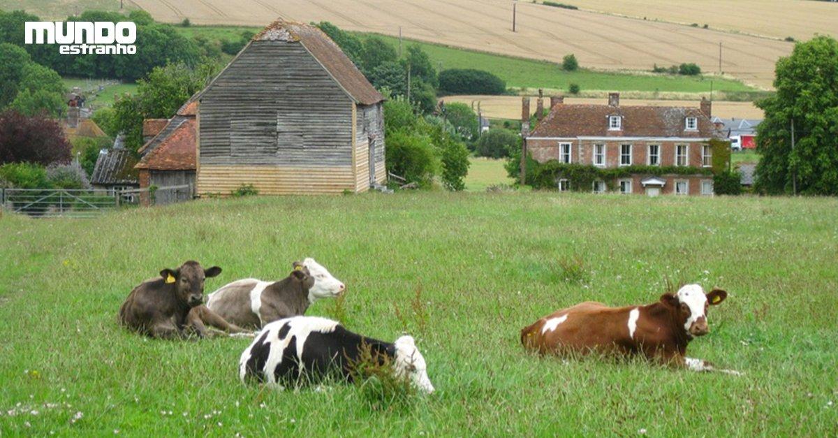 #BlogContandoNinguémAcredita Um em cada oito jovens no Reino Unido nunca viu uma vaca de verdade, diz estudo: https://t.co/i21z66JKkV