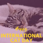 We love cats because they are purrfect! Happy #InternationalCatDay! #cats #pethealth