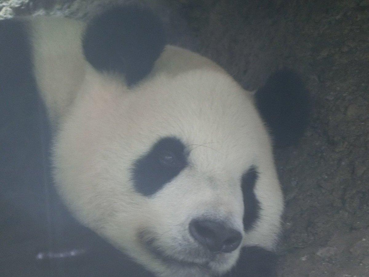 おはようございます! いよいよ本日より、「真夏の夜の動物園」が開催!! 今年も開園時間を3時間延長し…