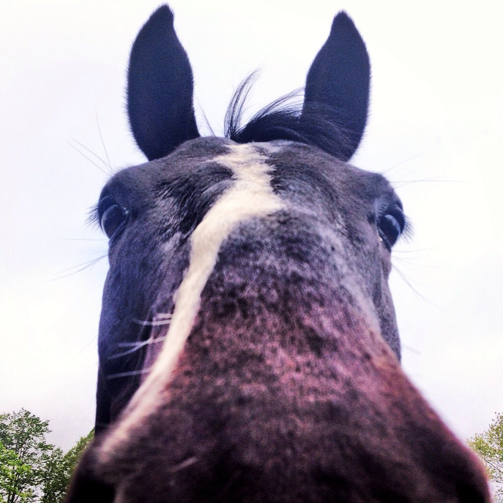 Horse dating websites