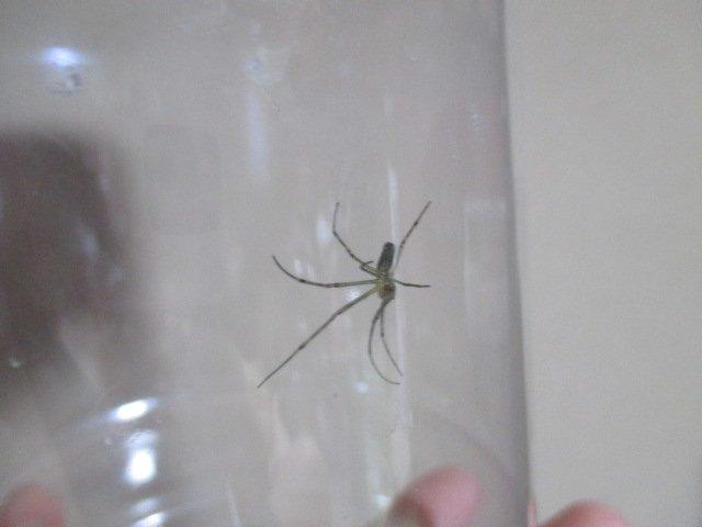 クモ.jpg