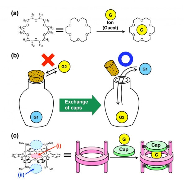 Development of molecular container with caps that can regulate uptake/release of objects https://t.co/swFWkQnn6d https://t.co/S42nqsrDNe