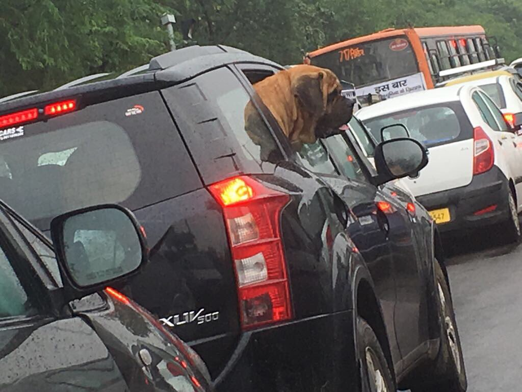 #BowWow Enjoying the monsoon amid traffic jams in Delhi! <br>http://pic.twitter.com/oY9KB0Um88