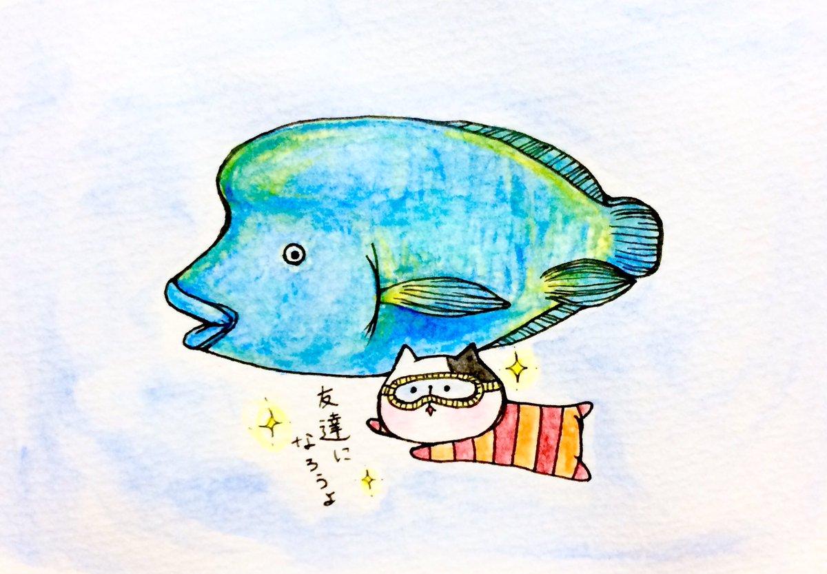 """おこにゃん on twitter: """"友達になろうよ✨ #ナポレオンフィッシュ"""