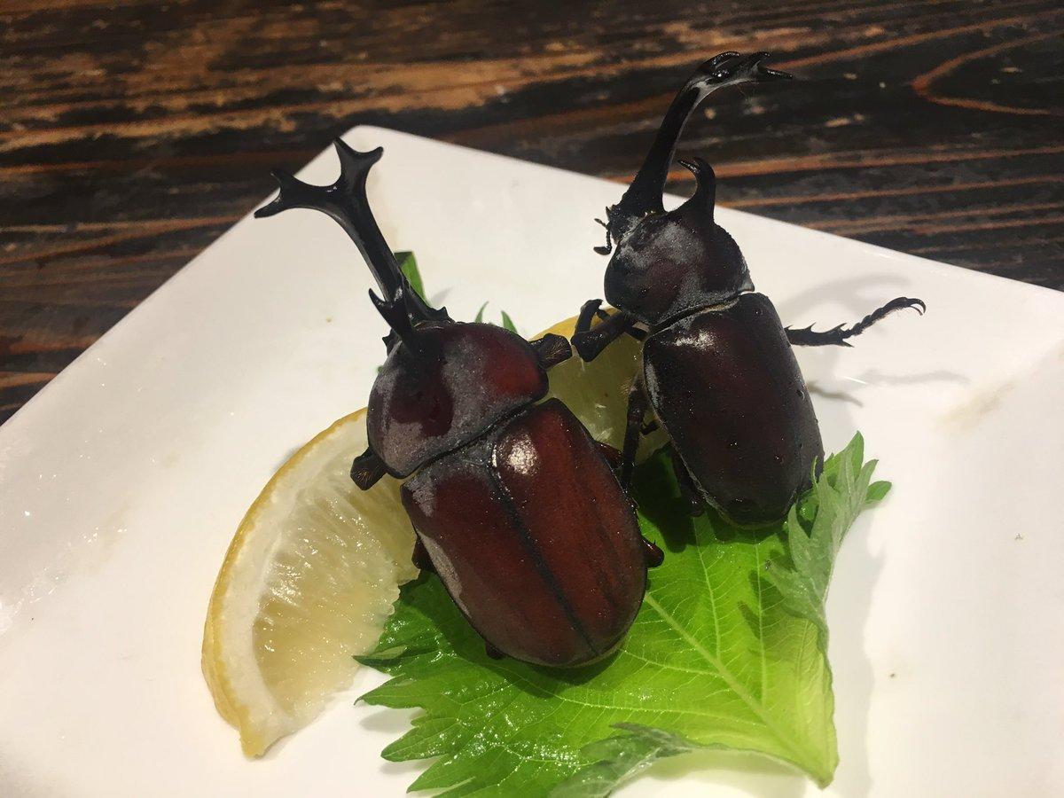 食用カブトムシ入荷!薬などを一切使わず珍獣屋の為に育てられたカブトムシです!日本で初めて食用カブトム…