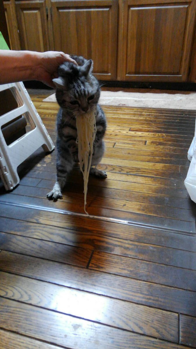 RT @BCAT_BGIRL: 泥棒出た…  #世界猫の日 #フードファイター https://t.co/OUOA0cW4QV