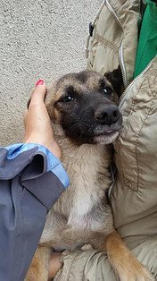 Compassion makes us feel better. You can feel great by #adopting or #sponsoring one of our #dogs. We're Wonderland #Targoviste<br>http://pic.twitter.com/y3ABasmQob