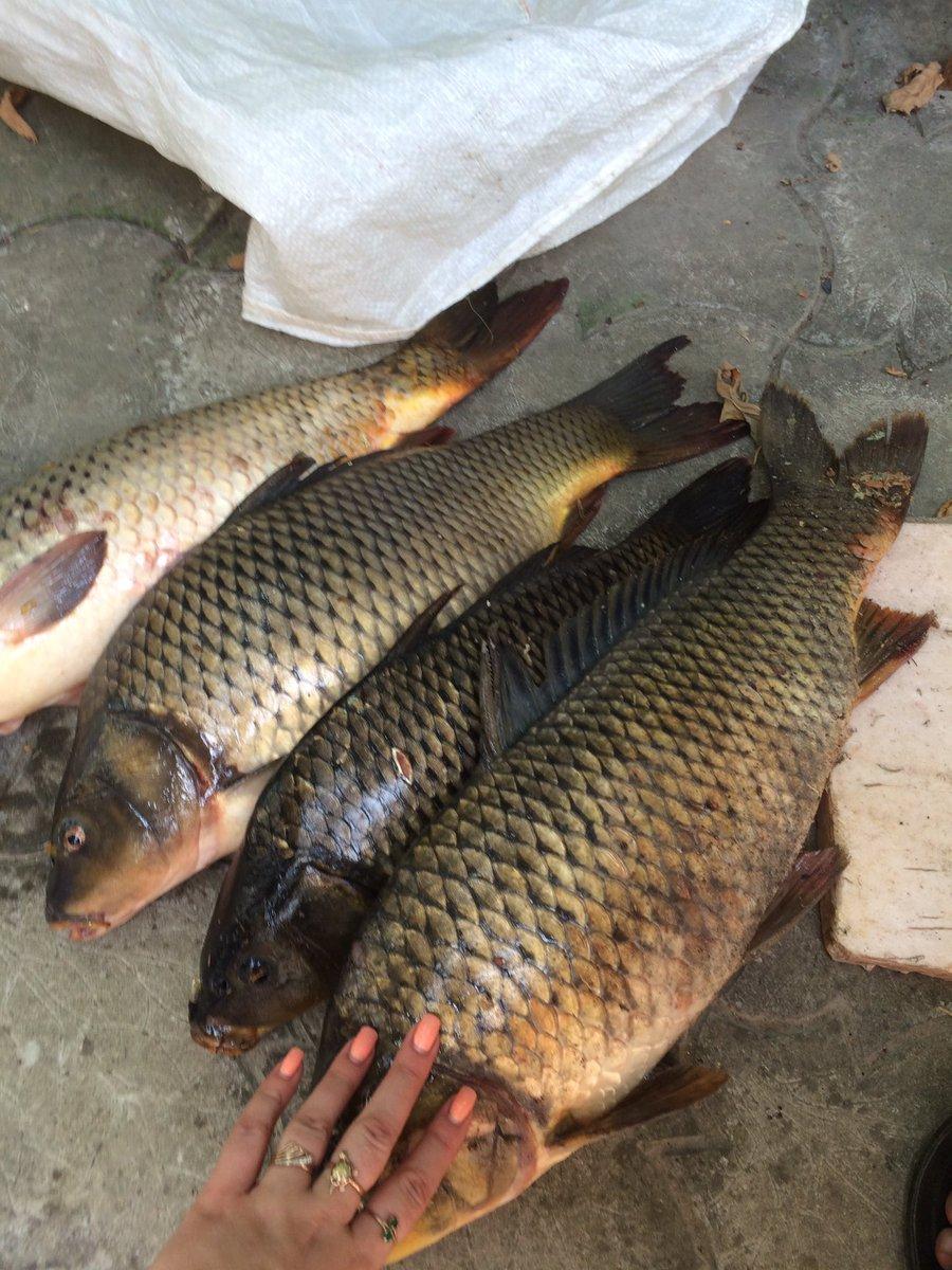 Рыбалка в ноябре на кубани