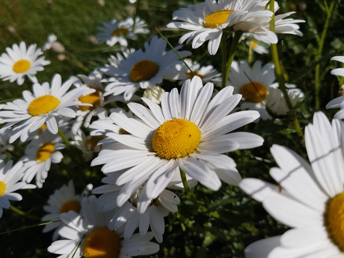 Catherine cawley on twitter the daisy fairy was a guide into the catherine cawley on twitter the daisy fairy was a guide into the realms of fairyland a special gift of the daisy fairy is resilience creativity izmirmasajfo