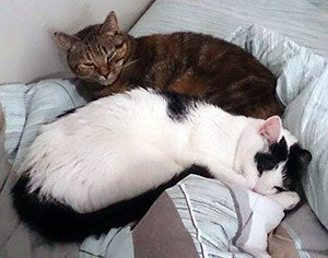 #new How my life has changed since adopting cats  https:// katzenworld.co.uk/2017/08/24/lif e-changed-since-adopting-cats/ &nbsp; …  #cats #cute <br>http://pic.twitter.com/uOvcbkNbzx