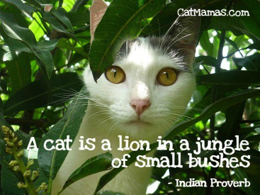 Anyone who&#39;s seen their precious #kitty stalking through the garden knows this! #cats #catlove<br>http://pic.twitter.com/aWk8wFu7rh